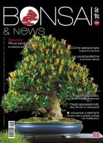 BONSAI & NEWS